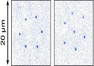 Magnetic quantum crystals