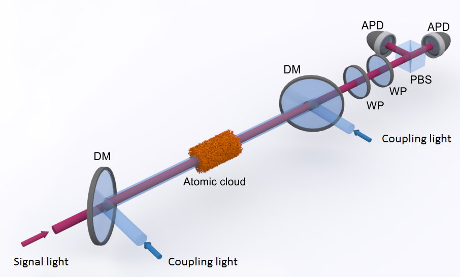 A cloud of cold atoms is illuminated with red signal light and blue coupling light. The light pulses are superimposed on dichroic mirrors (DM). With wave plates (WP), a polarizing beam splitter (PBS), and avalanche photodiodes (APD) the polarization of the transmitted signal light is determined.